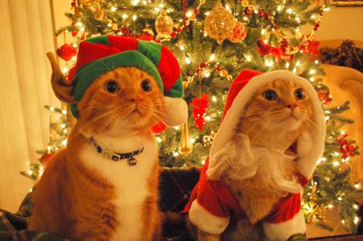 Imagens Fofas Especial Gatos Animais Fofinhos SA