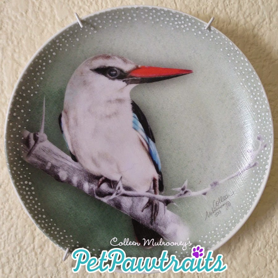 South African Birds :: Woodland Kingfisher::  Coloured pencils, decoupage, hand finished