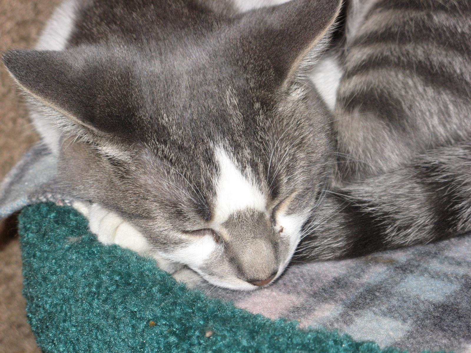 feline rescue cat tales skater girls update