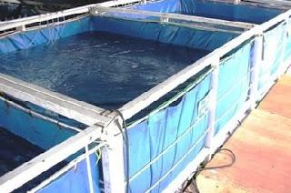 cara budidaya ikan sidat di kolam terpal,patin kolam terpal,gabus kolam terpal,resensi,patin di kolam terpal pdf,nila kolam terpal,gurame di kolam terpal,pembuatan kolam terpal ikan lele,