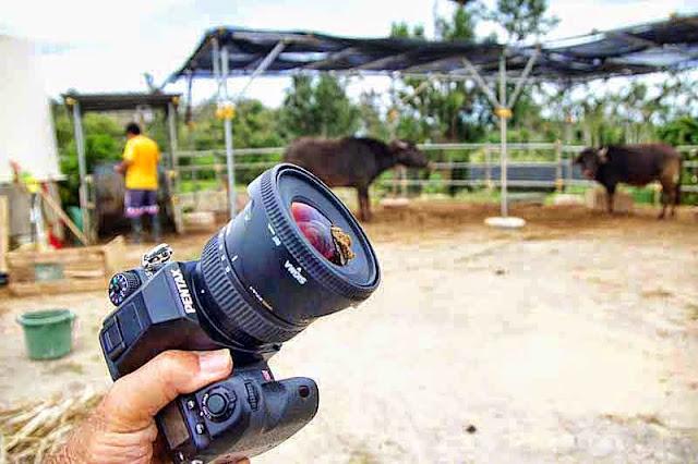 camera lens, soiled by bull