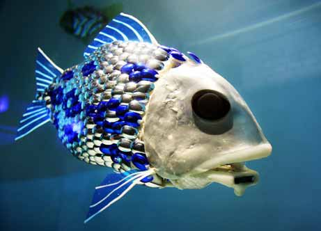 Funny pictures gallery types of fish freshwater fish Types of fish aquarium