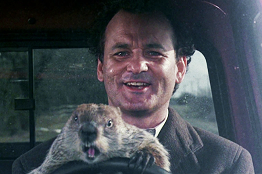 Phil Connors (Bill Murray) y la marmota Phil en Atrapado en el tiempo - Cine de Escritor