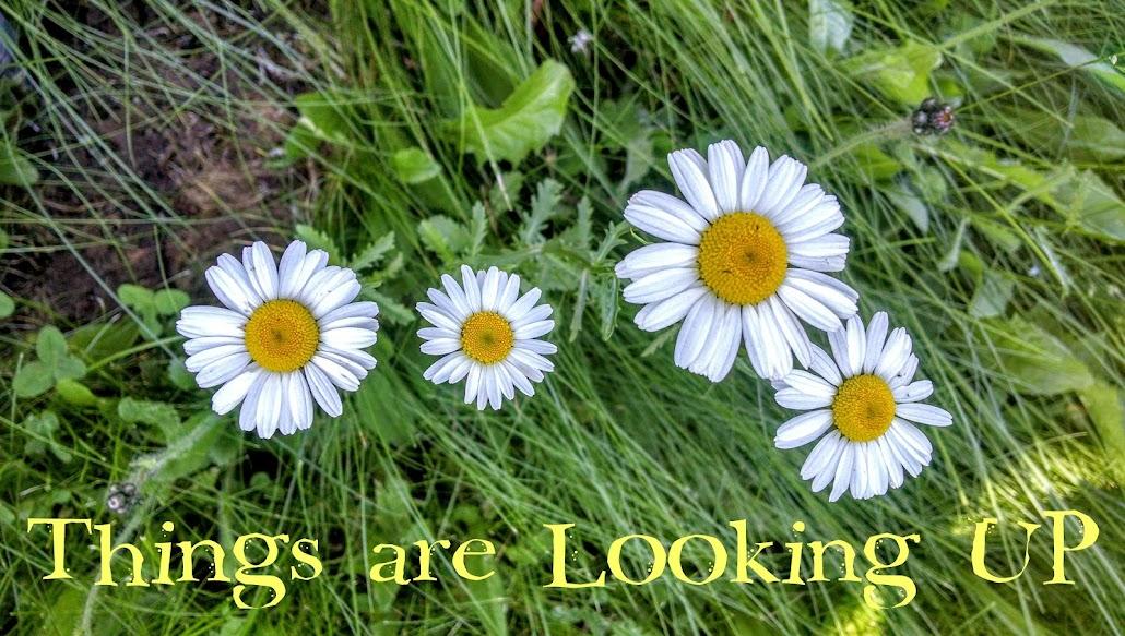 Things Are Looking U.P.