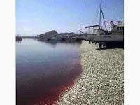 Fenomena Aneh, Jutaan Ikan Sarden Terdampar di Pantai Jepang