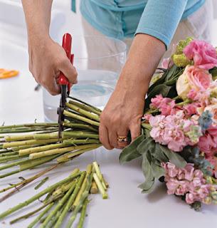 cách chăm sóc hoa
