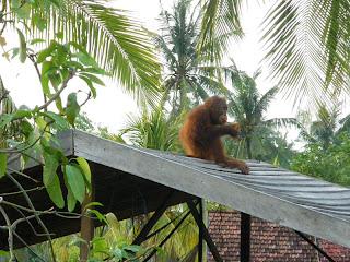 Sindi on the roof