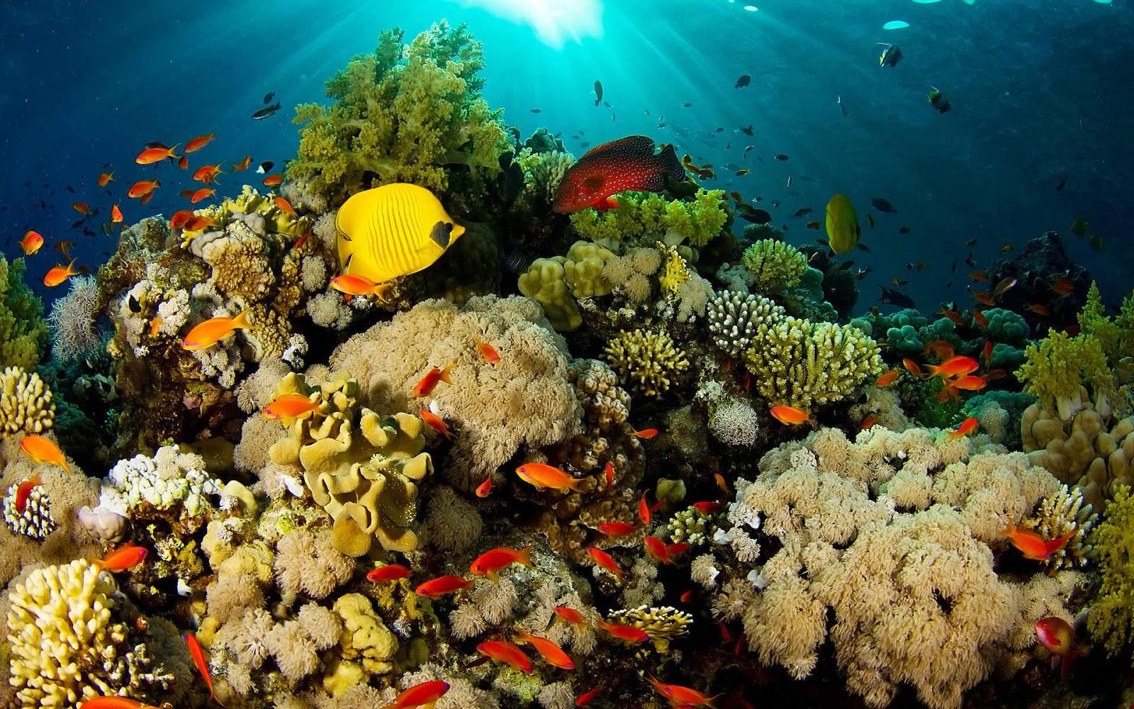 Arrecifes de Coral: Sabias que???: arrecifesdelcapitannemo.blogspot.com/2012/10/datos-de-interes-de...