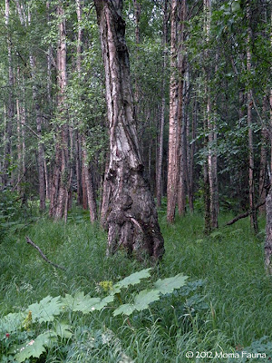 The Moustached Tree Spirit