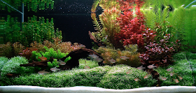 Aquascape Aquarium: Aquascapes - Giving Fish a Taste of ...