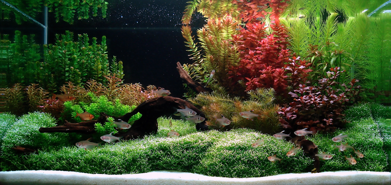Aquascaping Ideas Freshwater Aquascaping design ideas