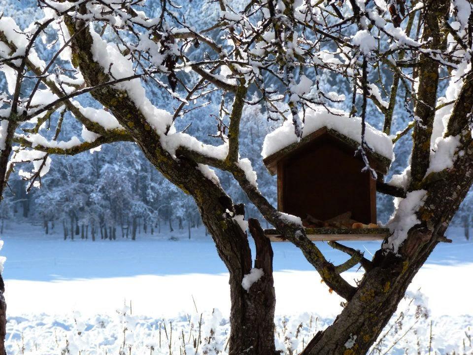 oiseau sous la neige, cabane à oiseau, neige, montagne, hautes alpes, alpes de haute provence, provence, sud, département, région, france