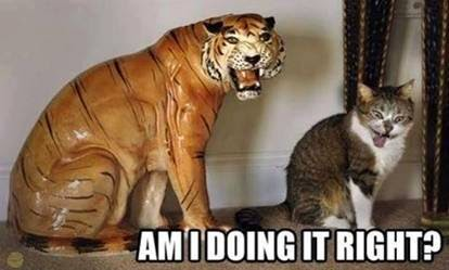 Am I doing it right? Cat meme tiger