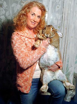foto kelinci terbesar di dunia - gambar hewan