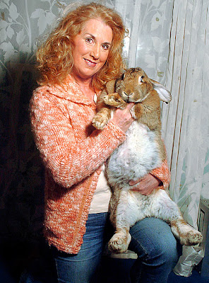 kelinci terbesar di dunia 2008