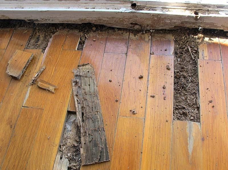 Gallart grupo el blog suelos y puertas de madera en - Como combatir la carcoma ...