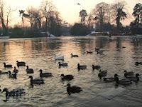 Fond d'écran février 2012 - Lac du bois de Boulogne (photo janv. 2009)