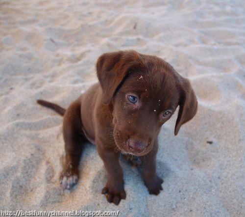 Funny small puppy.
