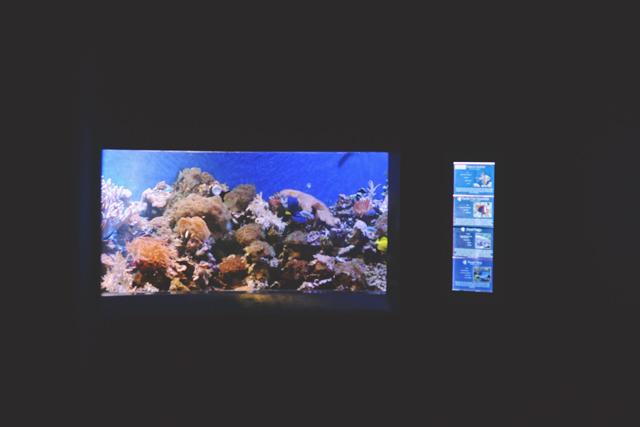 Bristol Aquarium fish tank