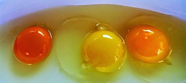 Ini Cara Mengetahui Telur yang Sehat