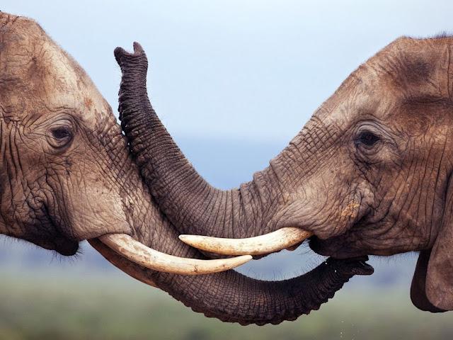 "<img src=""http://4.bp.blogspot.com/-xXoRRJz9Si0/Uq8U5_CNYgI/AAAAAAAAFs0/U_EmjJs2CqM/s1600/iii.jpeg"" alt=""elephant animal wallpapers"" />"