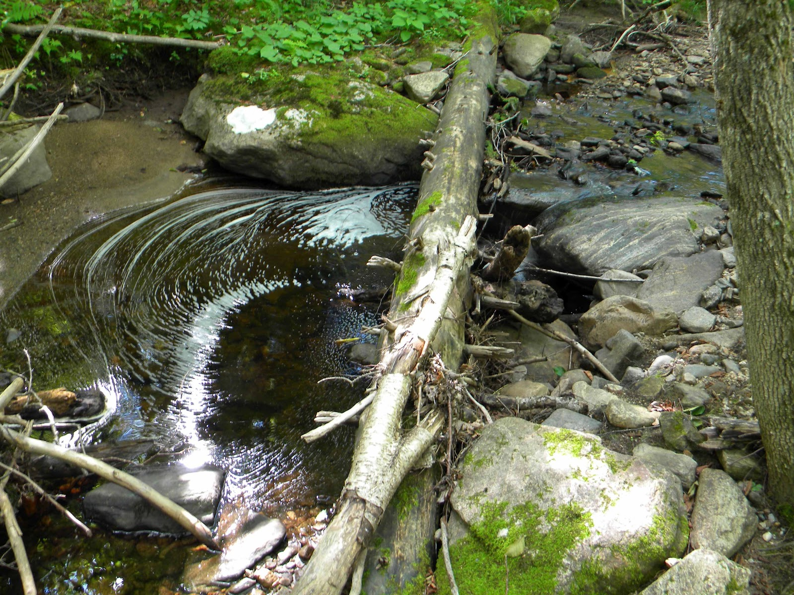 Granite Places Near Me : Griffith Brook, running very low.