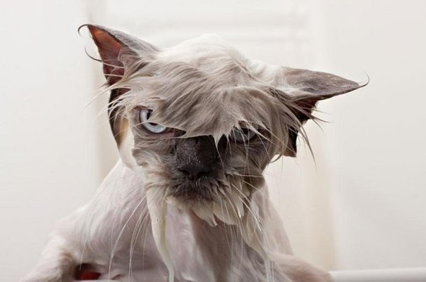 Мокрые коты (10 фото)