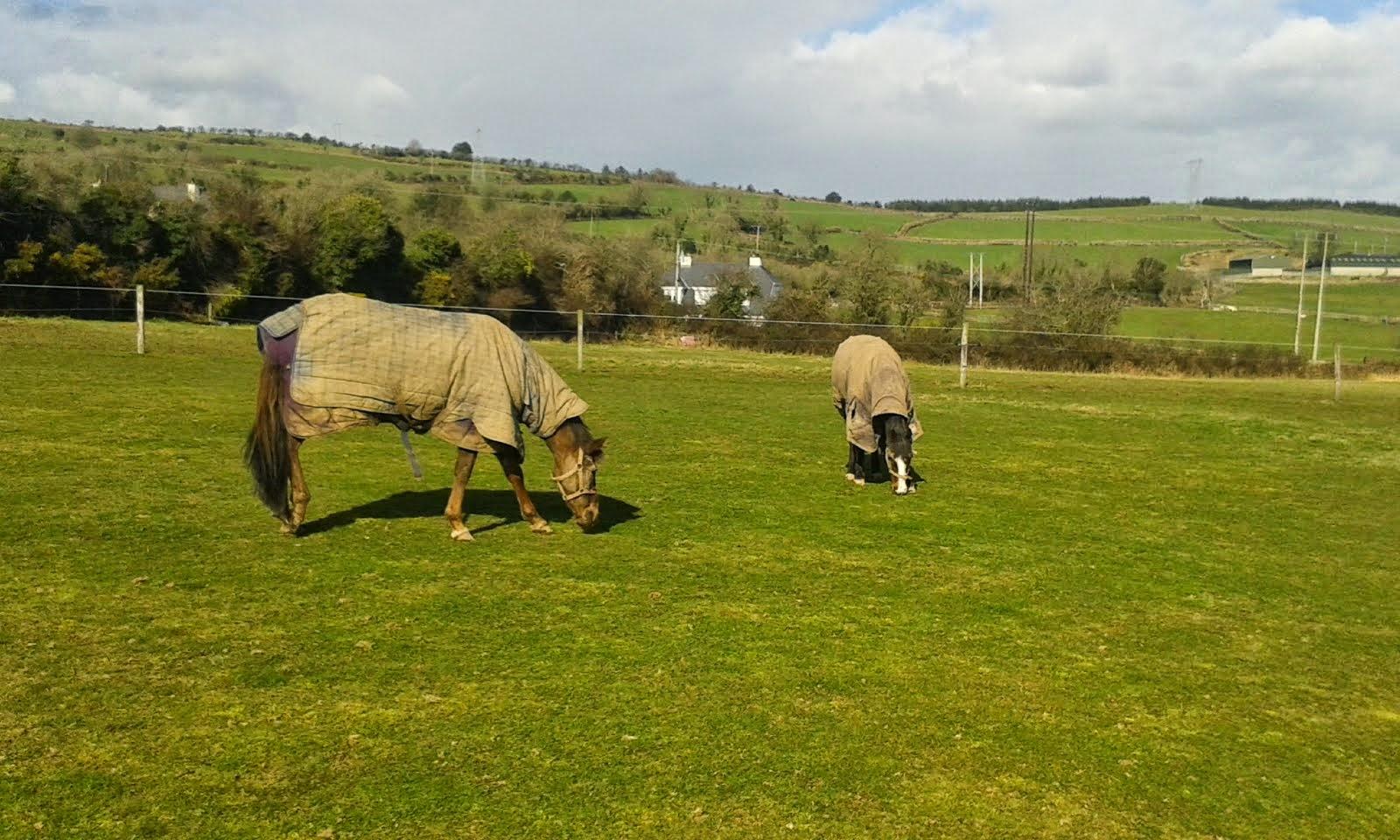 Springtime at Cullinagh