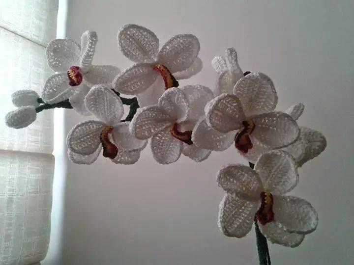 Tra un punto e l 39 altro tutorial orchidea uncinetto - Come curare un orchidea in casa ...