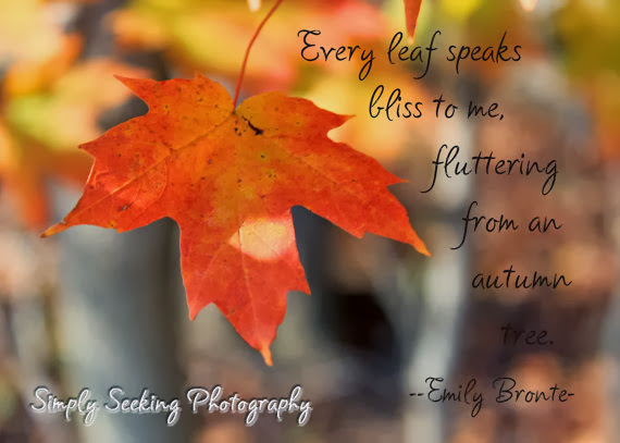 http://www.etsy.com/listing/104509116/fall-leaf-with-emily-bronte-quote-5x7