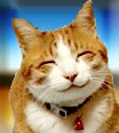 Facebook แมวอารมณ์ดี