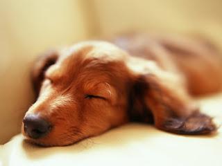 Dormir sin preocupaciones