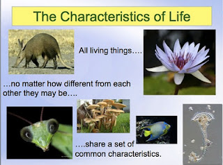an analysis of the characteristics of the plant life in biology Biology for life is designed for students enrolled in ib biology at skyline high school in the issaquah school district, located in the beautiful state of washington, usa t eachers and students from around the world use the site as a reference.