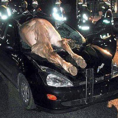 شاهد أغرب حوادث السيارات في العالم