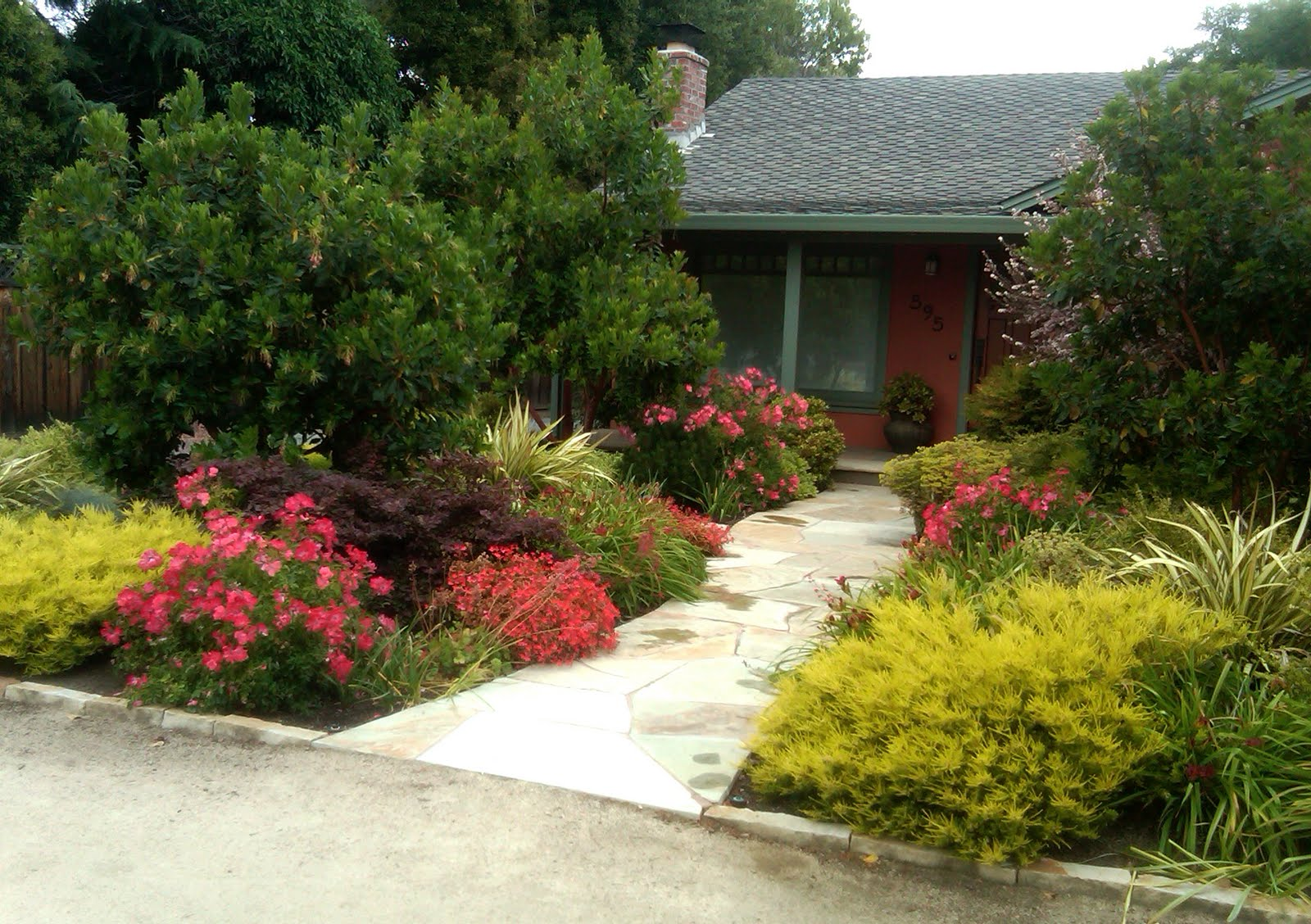 InterLeafings A Hot Color And NO LAWN Garden In Los Altos
