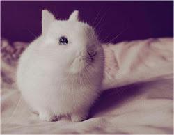 -Snuffy-