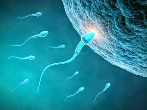 espermatozoide-óvulo-ciencia