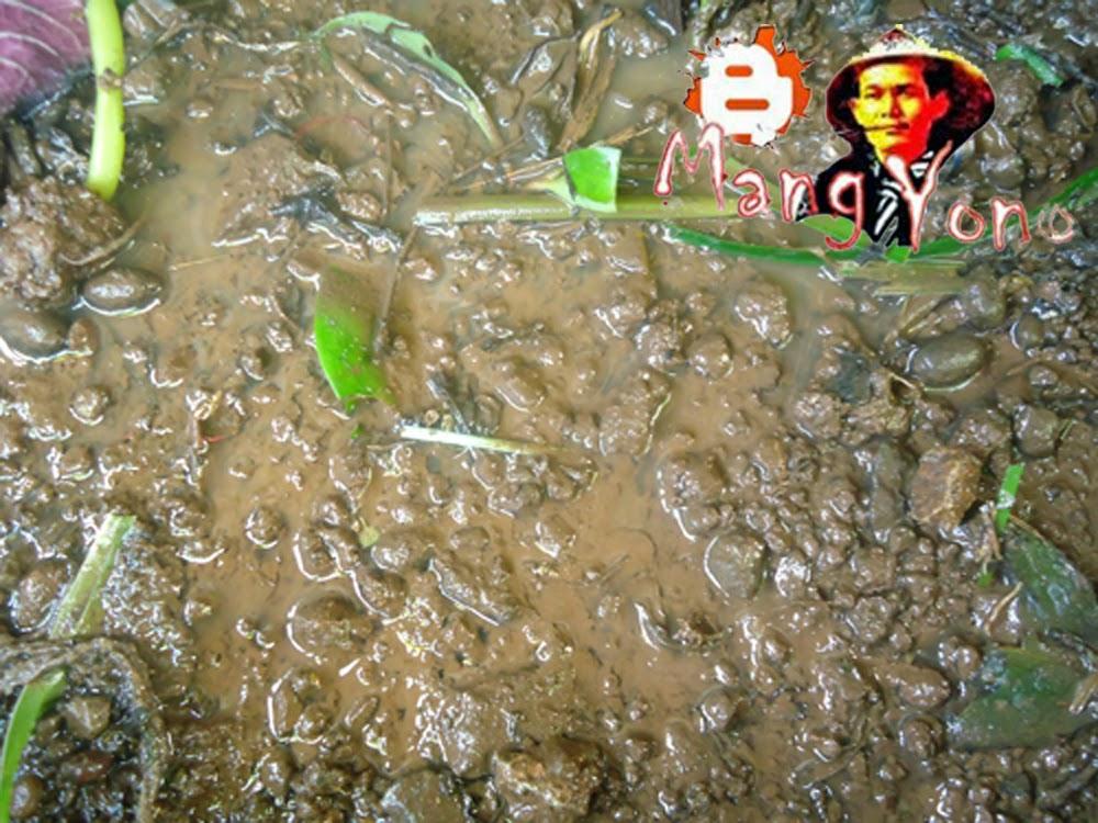 Poto (3). Mengolah tanah untuk penyemaian stek batang Soka