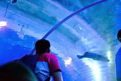 aqua tunnel