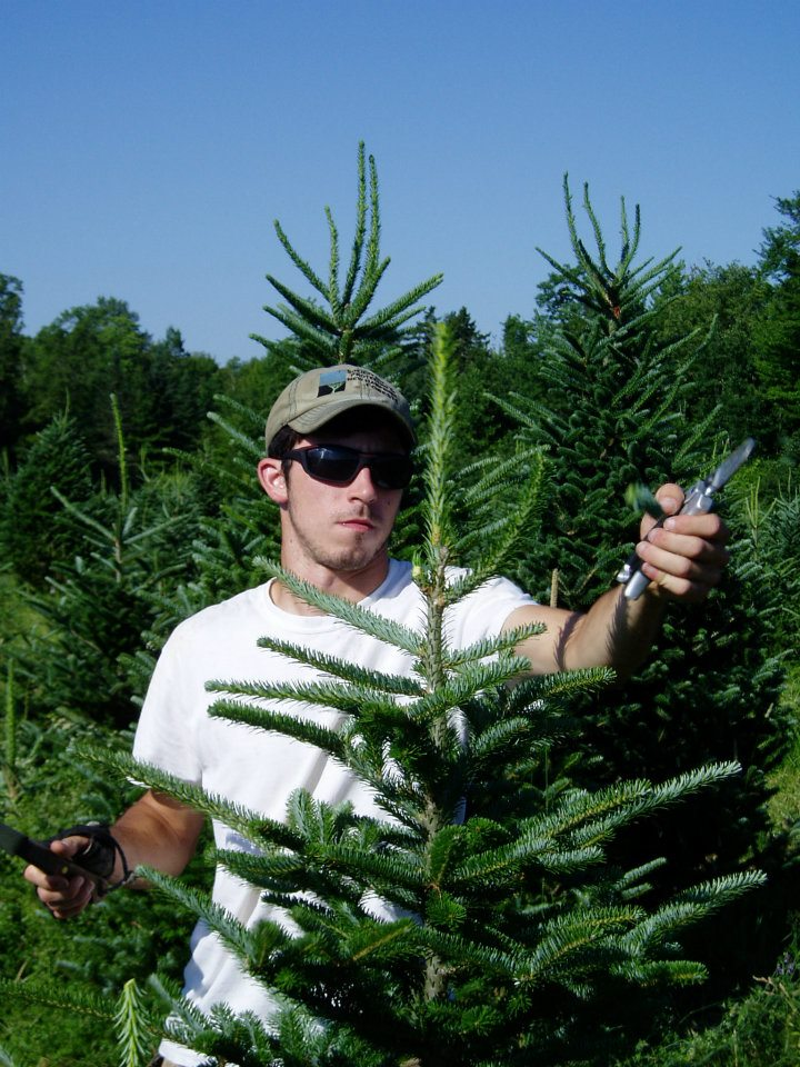 Oh, Christmas Tree  Shearing & Pruning at The Rocks