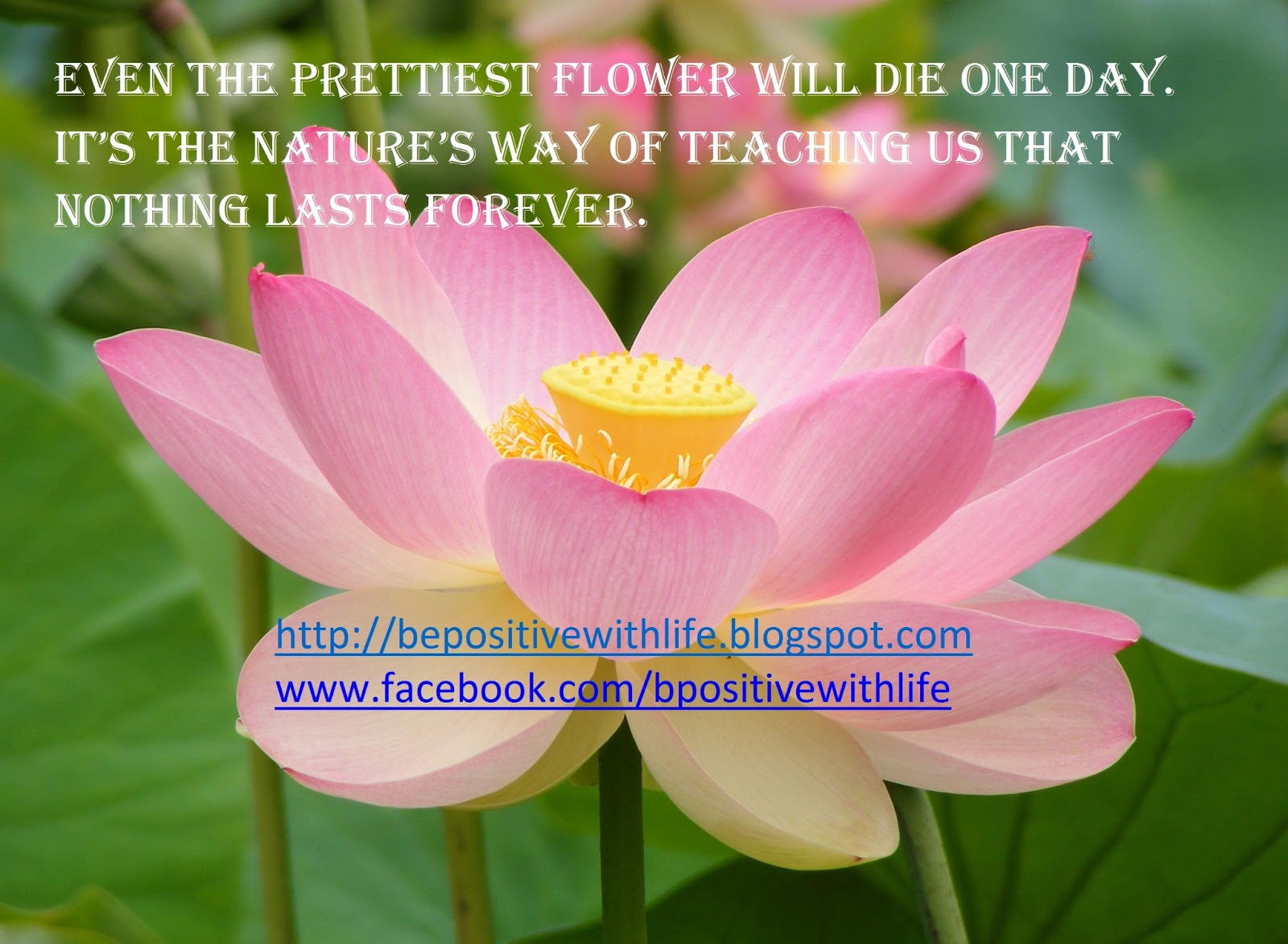 Quotes about flowers and beauty izmirmasajfo