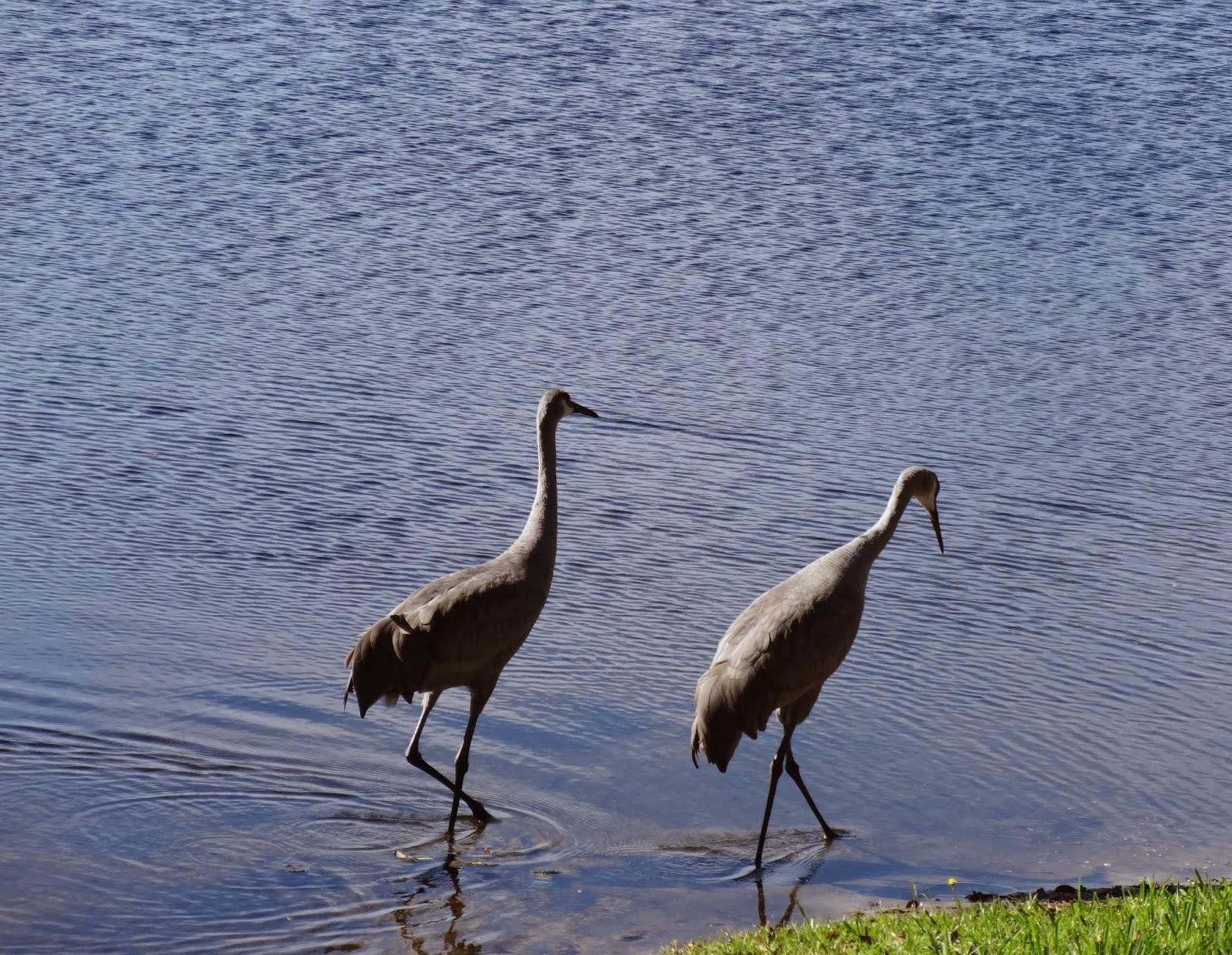 Florida backyard birds pictures Rentals in Florida - Snowbird Resources