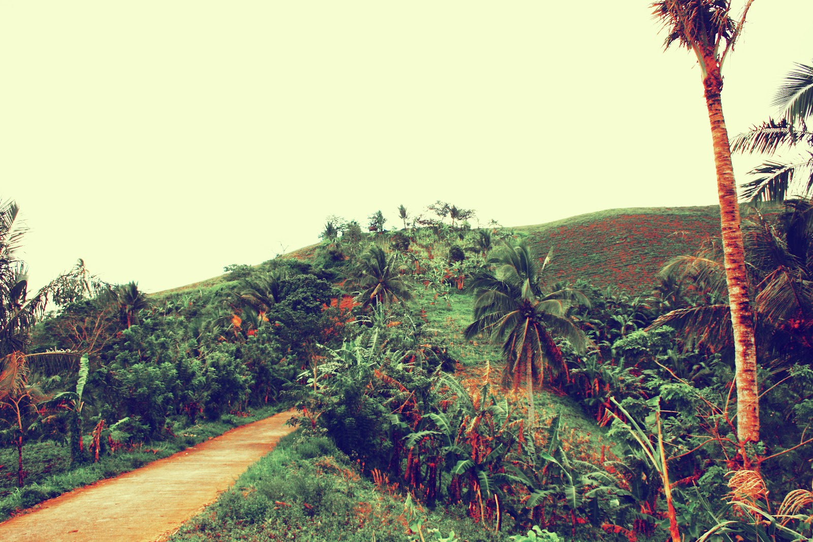my baao next travel destination your own backyard