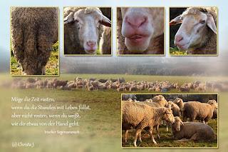 Schafe von Christa