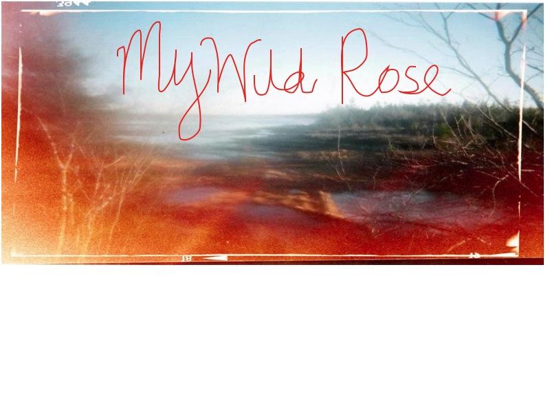 my wild rose