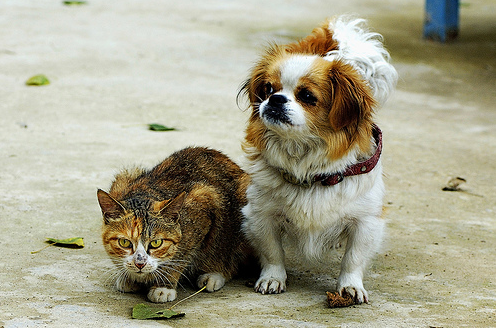 Persuasive Writing On Dogs Are Better Than Cats