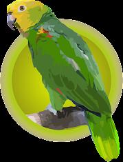 Cotorra Cabeciamarilla (Amazona Barbadensis)