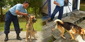 http://4.bp.blogspot.com/-xaOQURrvtwM/VMnATV1jMDI/AAAAAAAAGw0/OvH7ByG9PYQ/s280/kisah-istimewanya-anjing-penjaga-pesawat-tempur-tni-au.jpg