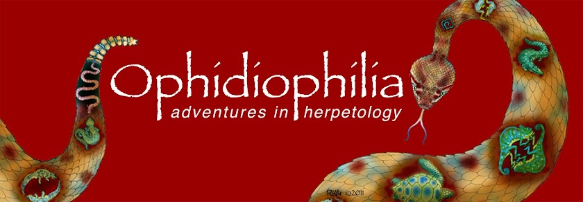Ophidiophilia
