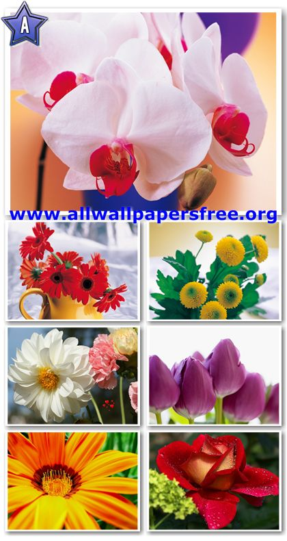 100 Beautiful Flowers Wallpapers 1280 X 1024 [Set 1]
